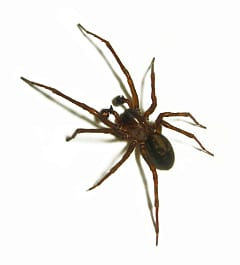 spider pest control sunshine coast